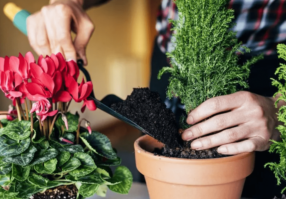 Лунный календарь пересадки комнатных растений на февраль 2021 года