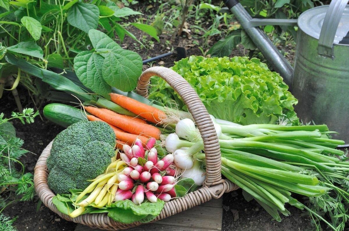 Лунный календарь садовода и огородника на февраль 2021 года